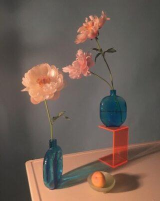 flower, minimal, leaf, guide for flower, colourful