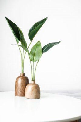 flower, minimal, leaf, guide for flower